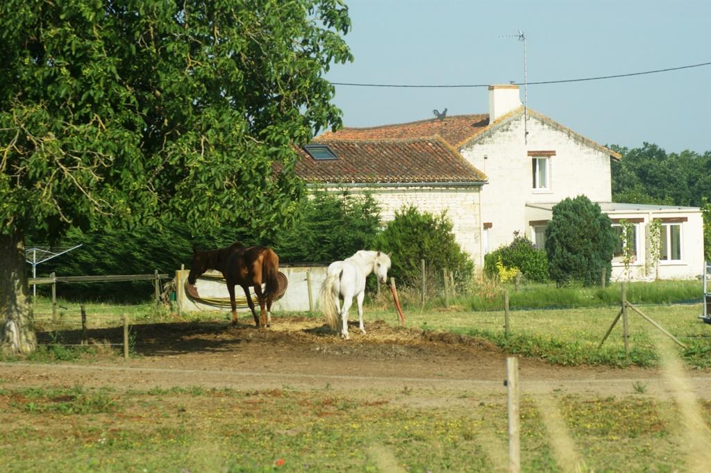 chevaux - Loudun