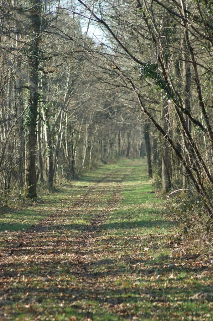 les bois environnants - Loudun